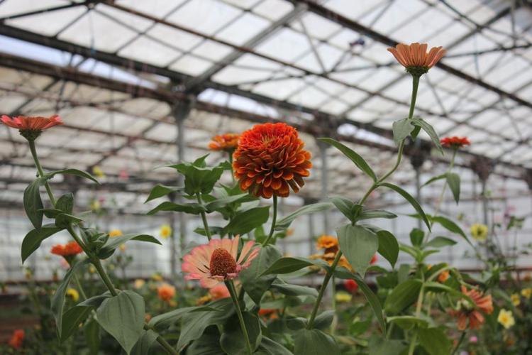 ՀՈԱԿ-ի ջերմոցատնկարանային վարչությունը ծառերի ու թփերի, բազմամյա ծաղիկների սեփական «արտադրություն» է սկսել