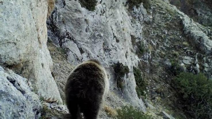 Ծուռթաթ քոթոթը վայրի բնության գրկում. տեսանյութ