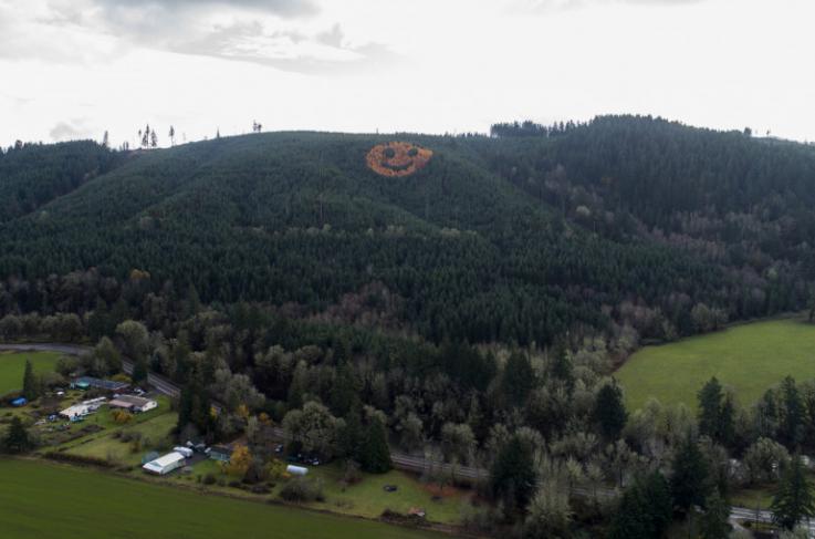 Օրեգոնում անտառապատ բլրի վրա ծառերի միջոցով «սմայլիկի» մեծ պատկեր է ստեղծվել (լուսանկարներ)