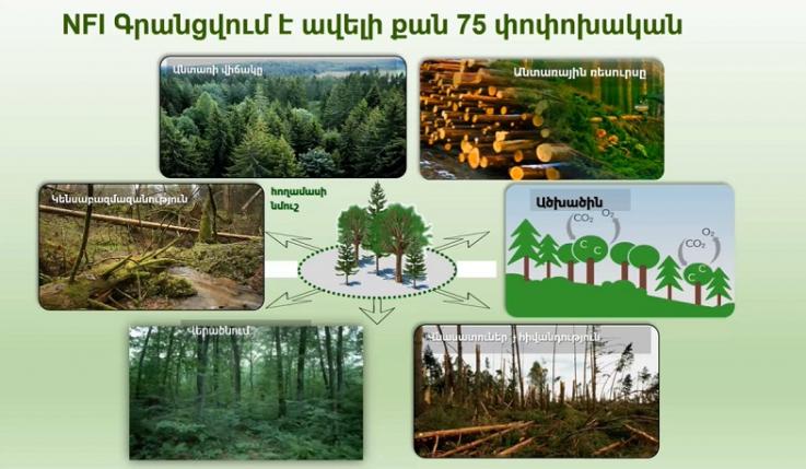 Ներկայացվել է Վրաստանի՝ անտառների ազգային գույքագրման պլանավորման և իրականացման փորձը