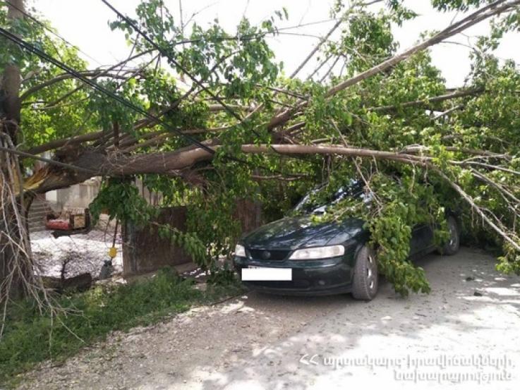 Ծառի ճյուղերը քամուց ընկել են կայանված ավտոմեքենայի վրա, վնասել էլեկտրալարերը և գազատար խողովակը
