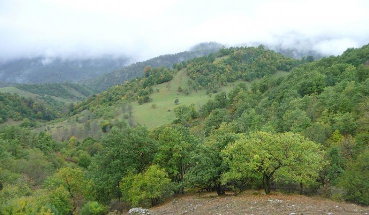 Մեղադրանքներ են առաջադրվել Լոռու մարզի անտառային ֆոնդի պահպանության համար պատասխանատու ևս 9 պաշտոնատար անձանց