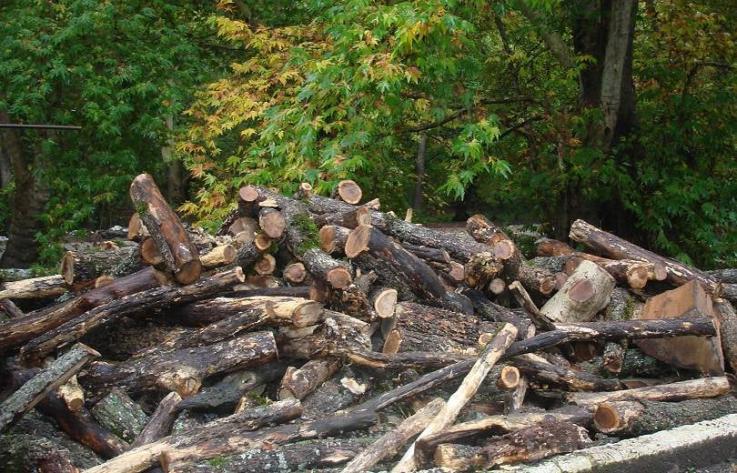 Անտառամերձ բնակավայրերի բնակիչներին կտրամադրվի թափուկ վառելափայտ. բնակավայրերի ցանկը թարմացվել է